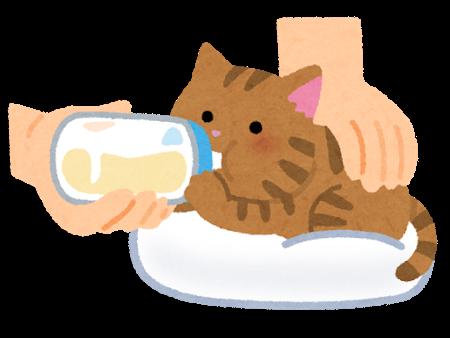 子猫 [福岡営業所 谷口] 2021/6/16